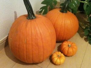ジャックのかぼちゃとおもちゃかぼちゃ